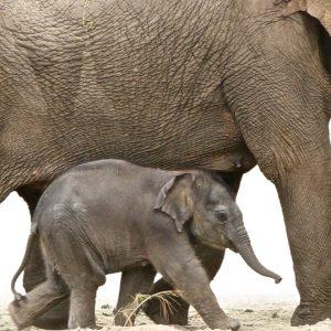 Amsel-Schule-Elefanten-Spenden